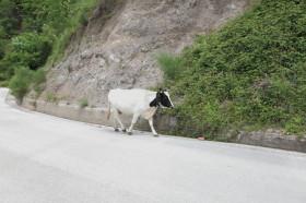 Serino-Montecorvino Rovella