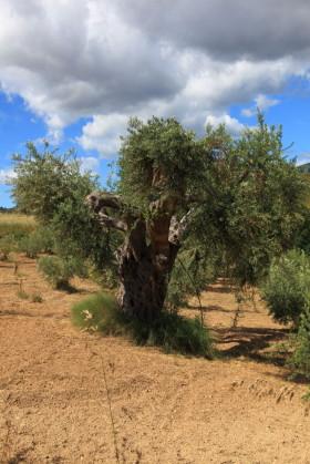 Morano Calabro-Tarsia